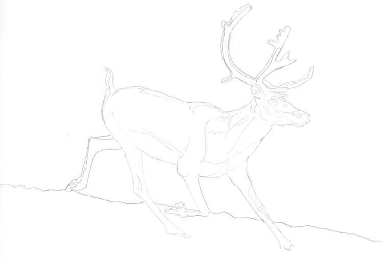 Rentier zeichnen - Bleistiftzeichnung