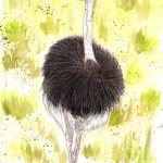 Vogel Strauß Aquarell - fertig