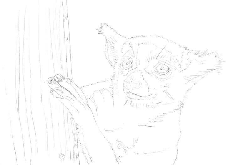 Kattas zeichnen und malen: Bleistiftskizze