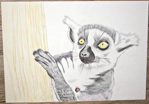 Kattas zeichnen - Buntstiftkoloration Hintergrund 1