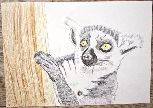 Kattas zeichnen - Buntstiftkoloration Hintergrund 2