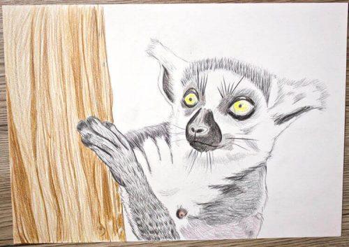Kattas zeichnen - Buntstiftkoloration Hintergrund 3