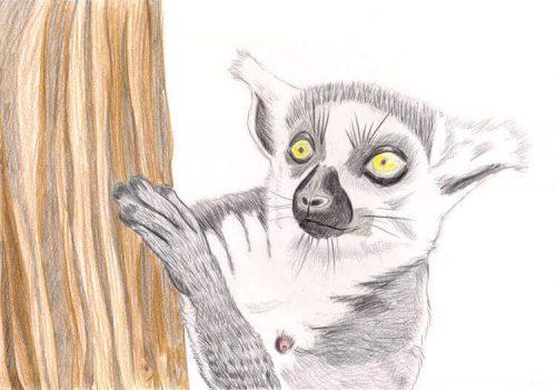 Kattas zeichnen - Buntstiftkoloration Hintergrund 4