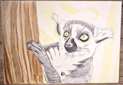 Kattas zeichnen - Buntstiftkoloration Hintergrund 5