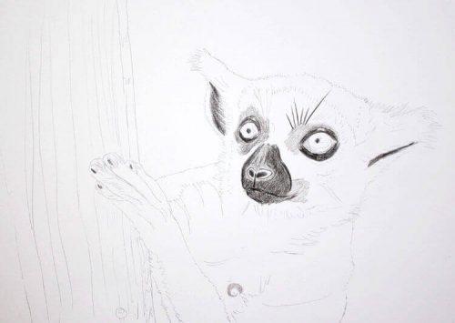 Kattas zeichnen - Buntstiftkoloration Vordergrund 1