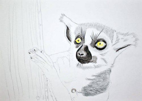 Kattas zeichnen - Buntstiftkoloration Vordergrund 2