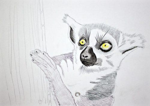 Kattas zeichnen - Buntstiftkoloration Vordergrund 3