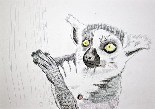Kattas zeichnen - Buntstiftkoloration Vordergrund 4