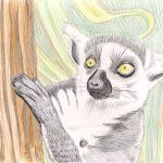 Kattas zeichnen - fertige Buntstiftkoloration