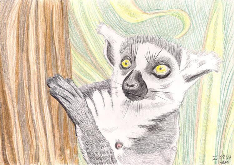 Kattas zeichnen und malen - fertige Buntstiftkoloration
