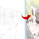 Step by step: Kattas zeichnen und malen