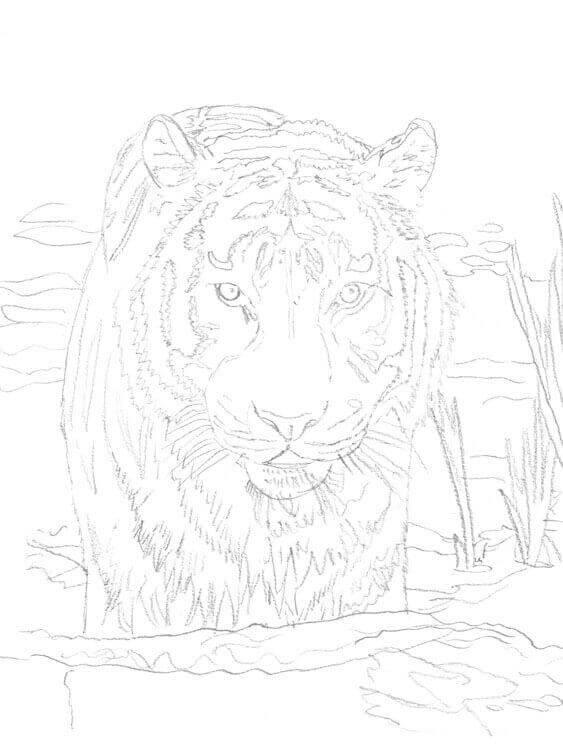TierABC Tiger zeichnen - Bleistiftskizze