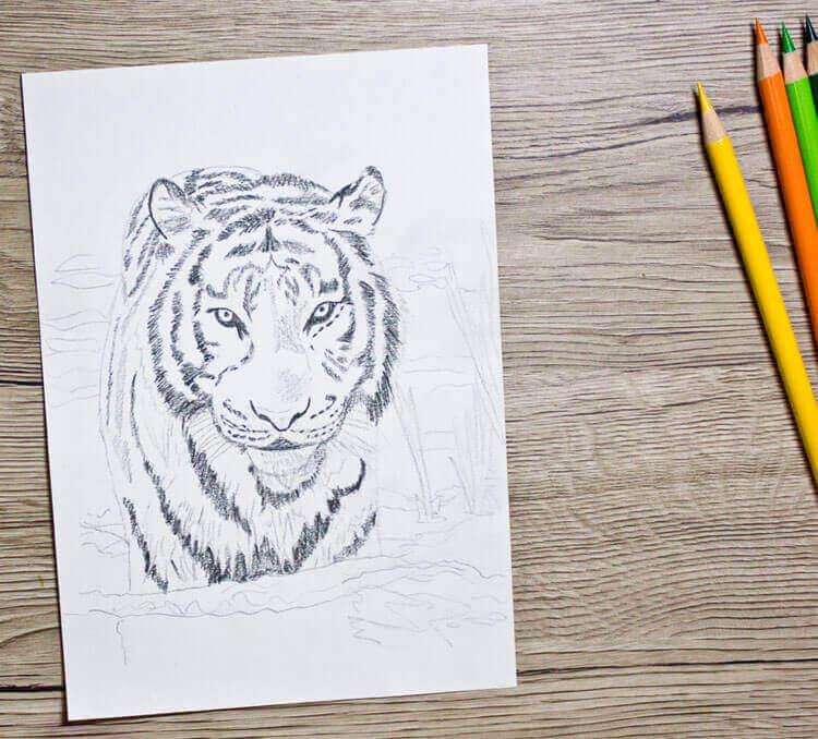 Tier Abc T Wie Tiger Tiger Zeichnen Und Malen Lernen