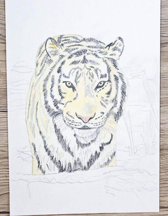 tier abc t wie tiger tiger zeichnen und malen lernen. Black Bedroom Furniture Sets. Home Design Ideas