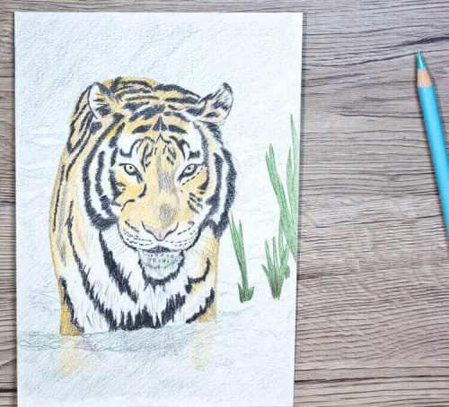 TierABC Tiger Buntstiftkolorierung