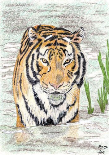 Fertige Tiger Buntstiftkolorierung