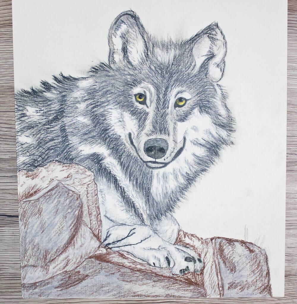 bilder zum ausmalen vorlage wolf malen  malvorlagen