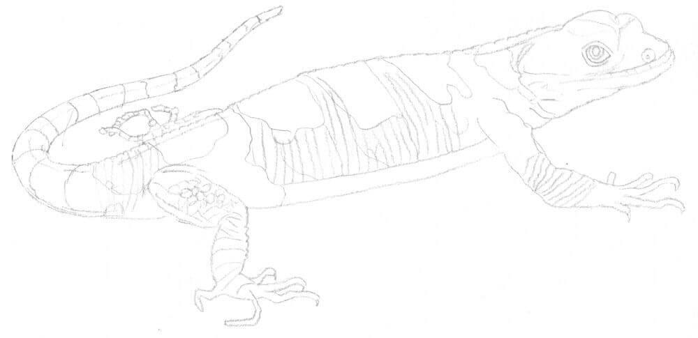 Xenosaurier Bleistiftskizze