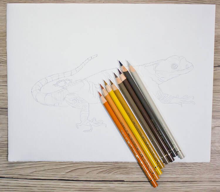 Xenosaurier Buntstiftkolorierung 1