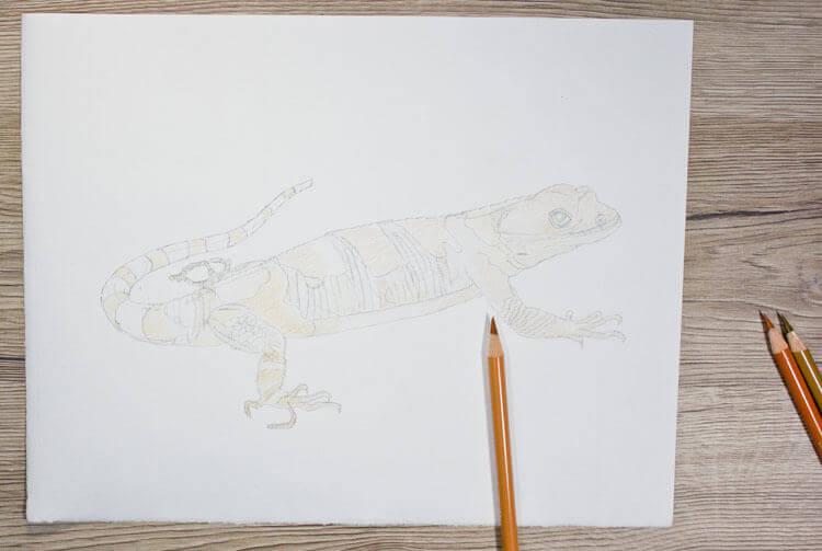 Xenosaurier Buntstiftkolorierung 2