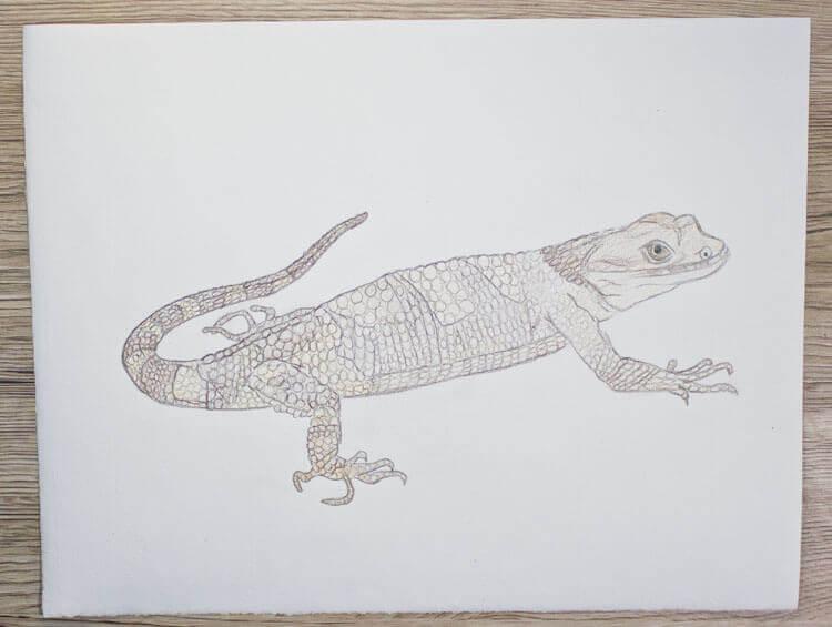 Xenosaurier Buntstiftkolorierung 3