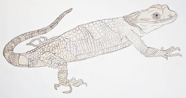 Xenosaurier Buntstiftkolorierung 4
