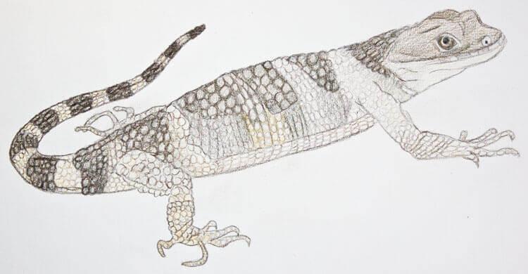 Xenosaurier Buntstiftkolorierung 5