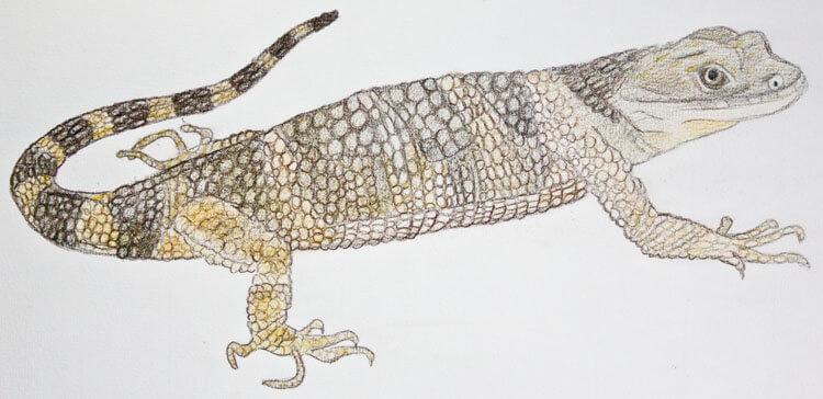 Xenosaurier Buntstiftkolorierung 6
