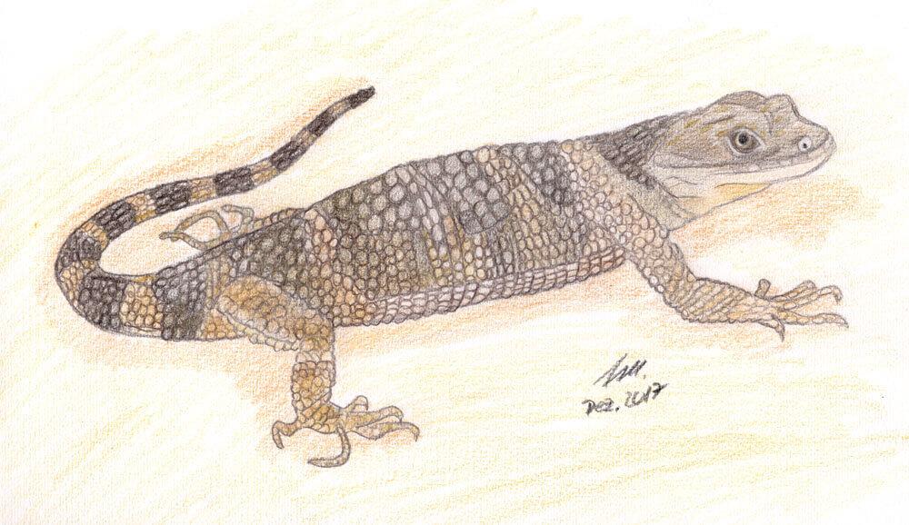 Xenosaurier Buntstiftkolorierung fertig