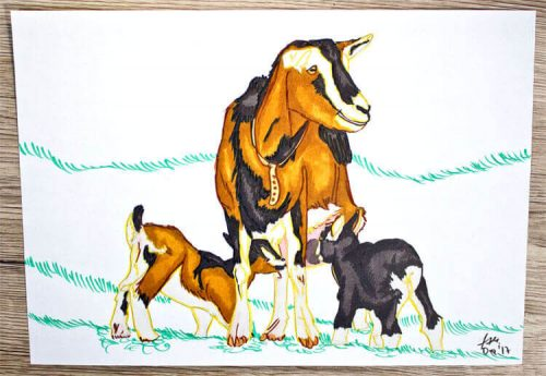 Ziege zeichnen - Kolorierung 3