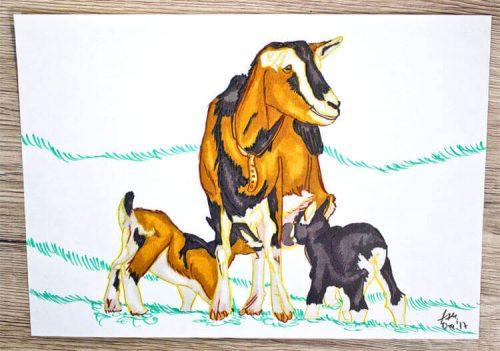 Ziege zeichnen - Kolorierung 4