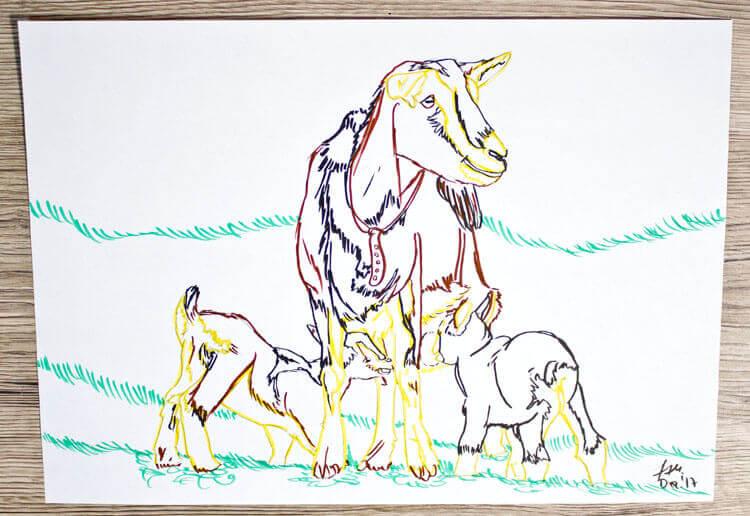 Ziege zeichnen