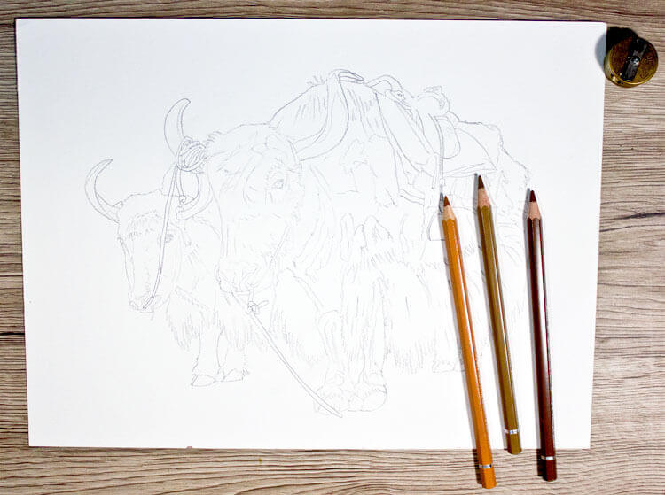 Yak zeichnen Bleistiftzeichnung