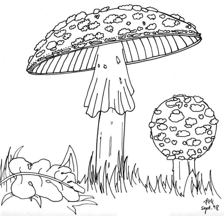 Pilze zeichnen - Finelinerkonturen