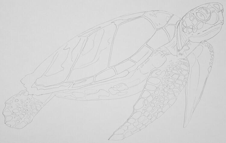 Meeresschildkröte Bleistiftskizze