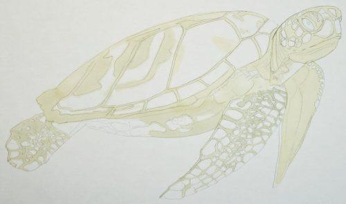 Meeresschildkröte malen mit Brushmarker 1