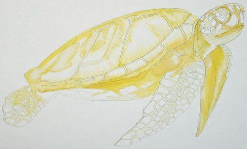 Meeresschildkröte malen mit Brushmarker 2
