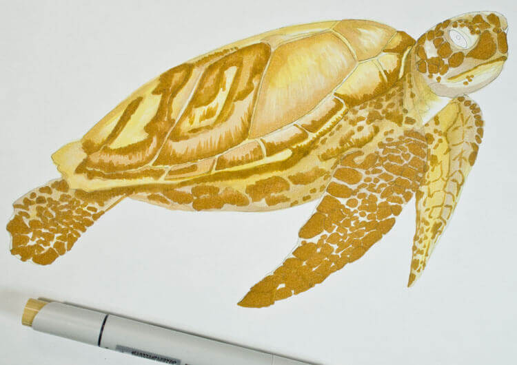 Meeresschildkröte malen mit Brushmarker 3