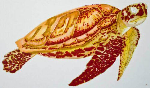 Meeresschildkröte malen mit Brushmarker 4