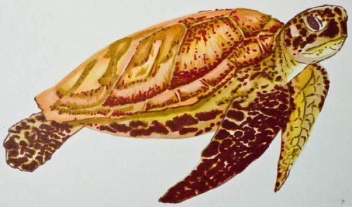 Meeresschildkröte malen mit Brushmarker 5