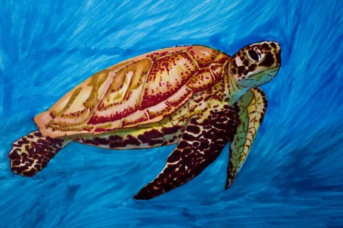 Meeresschildkröte malen mit Brushmarker 6 Detailansicht