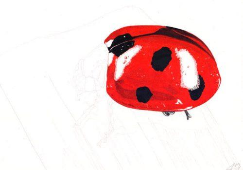 Marienkäfer Buntstiftmalerei 6 mit Prismacolor