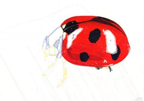 Marienkäfer Buntstiftmalerei 7 mit Prismacolor