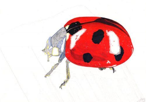 Marienkäfer Buntstiftmalerei 8 mit Prismacolor