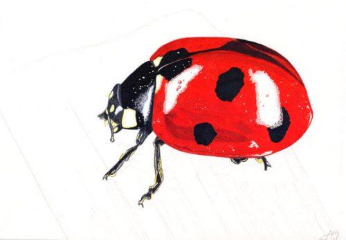 Marienkäfer Buntstiftmalerei 9 mit Prismacolor