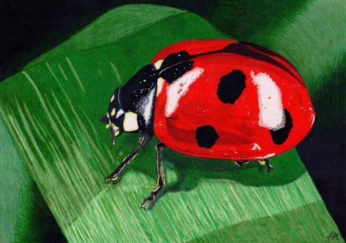 Marienkäfer Buntstiftmalerei mit Prismacolor - fertiges Bild