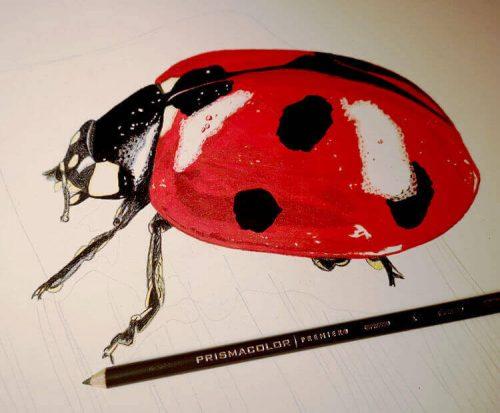 Marienkäfer malen mit Prismacolor Buntstiften - Zwischenschritt 3