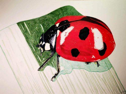 Marienkäfer malen mit Prismacolor Buntstiften - Zwischenschritt 4