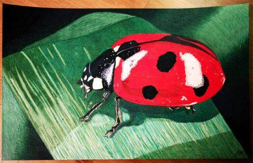 Marienkäfer malen mit Prismacolor Buntstiften fertig