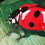 Marienkäfer malen mit Prismacolor